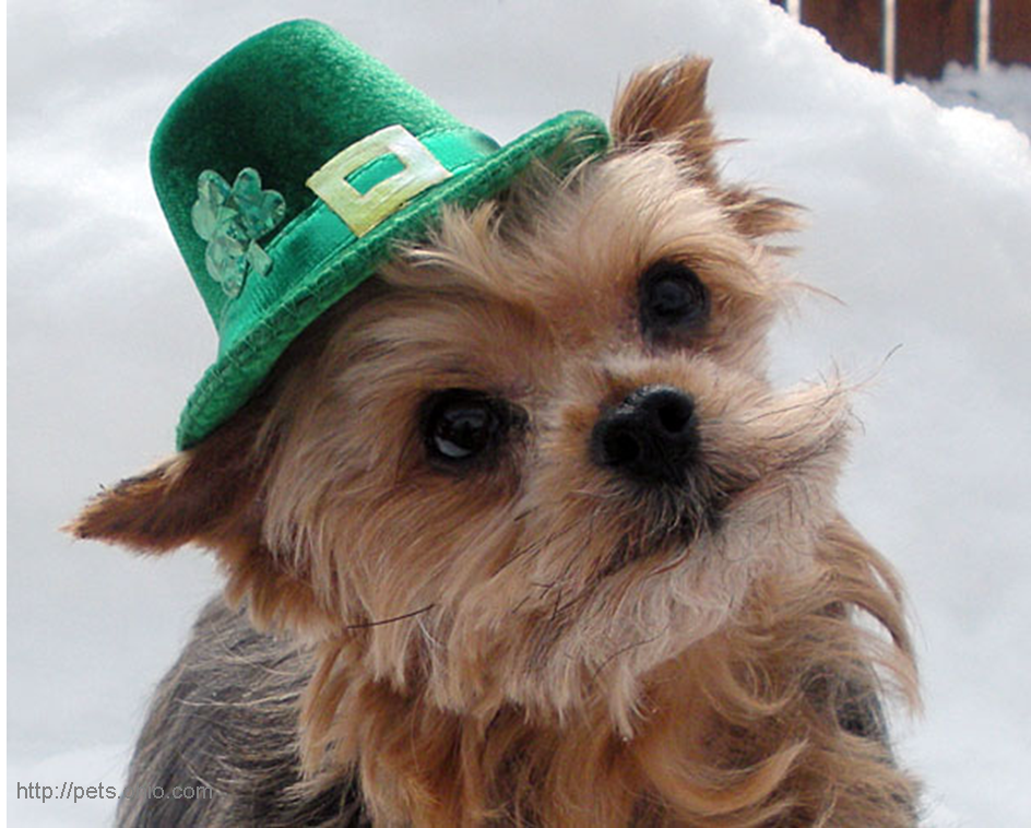 Go Back > Gallery For > Cute St Patricks Day Animals