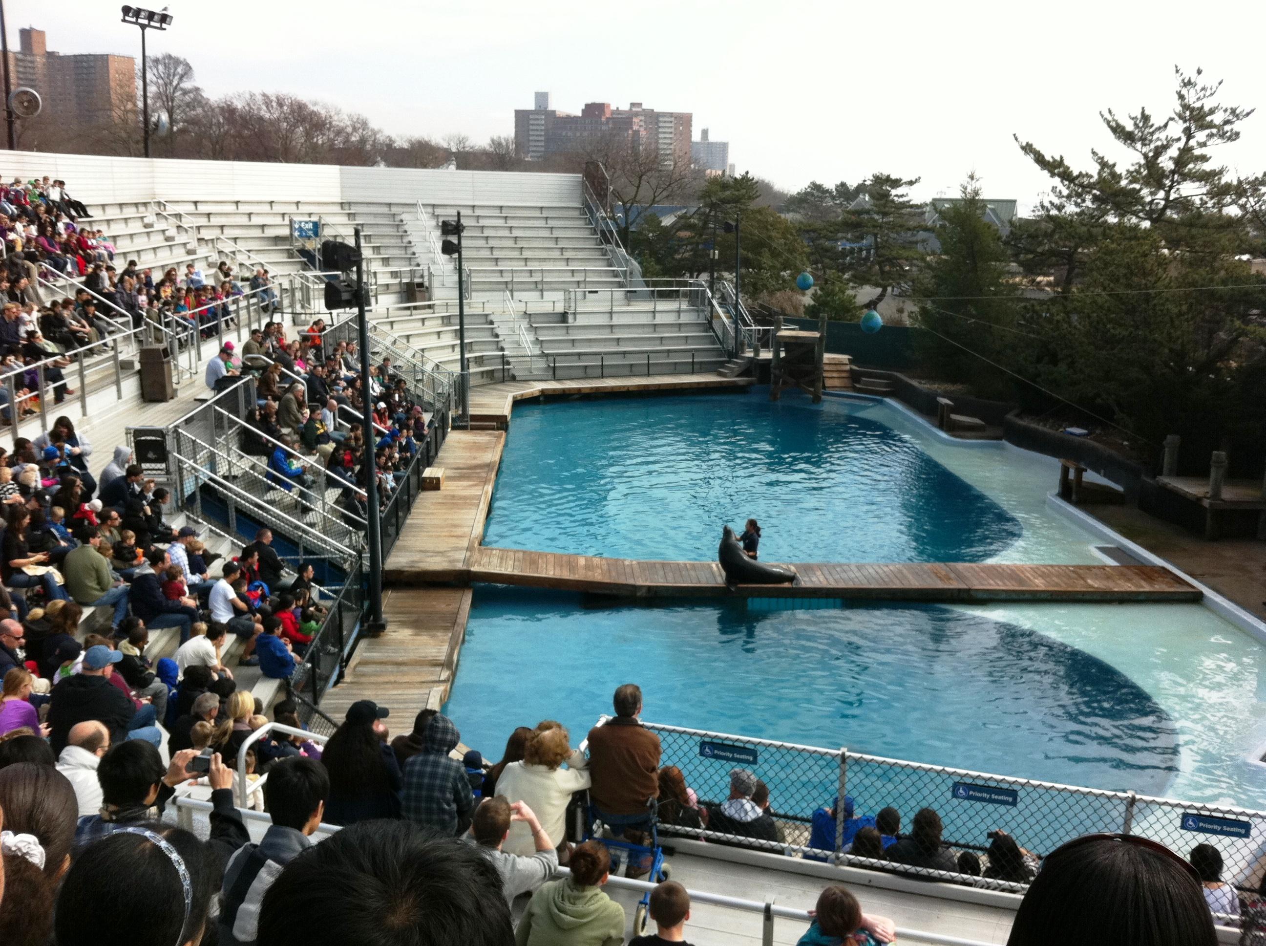 New York Aquarium Fun New York Cares Urban Adventures