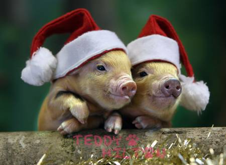 photo courtesy of http://www.tumblr.com/tagged/christmas%20animals