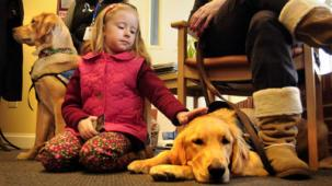 comfort dogs in sandy hook
