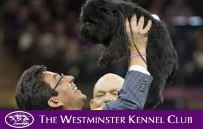 _Banana_Joe_and_Handler_Ernesto_Lara_Win_Westminster_Dog_Show_thumb-400x255