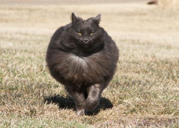 sygmund-cat
