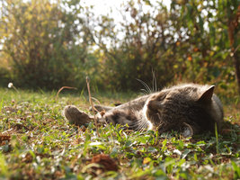 cat sunbathing 2