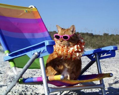 cat_beach_pictures