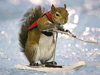 squirrel_waterski