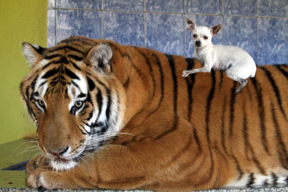photo courtesy of nypost.com