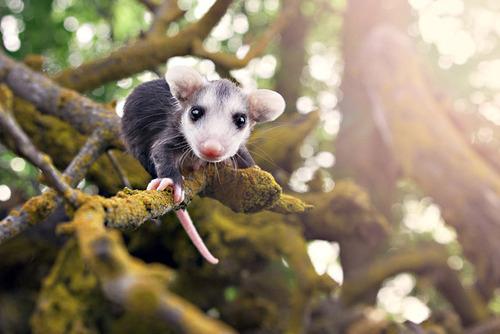 photo courtesy of cute-baby-animals.tumblr.com