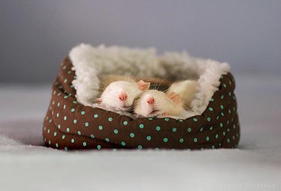 photo courtesy of http://www.cutestpaw.com/