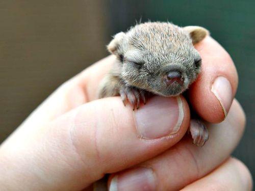Photo courtesy of www.zooborns.com