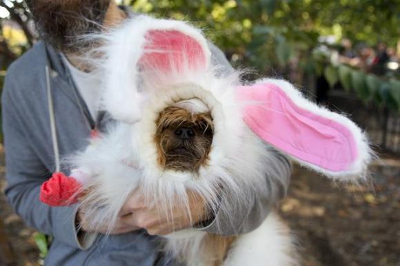 bunnywoof