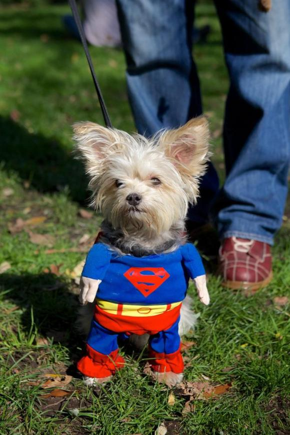 superwoof