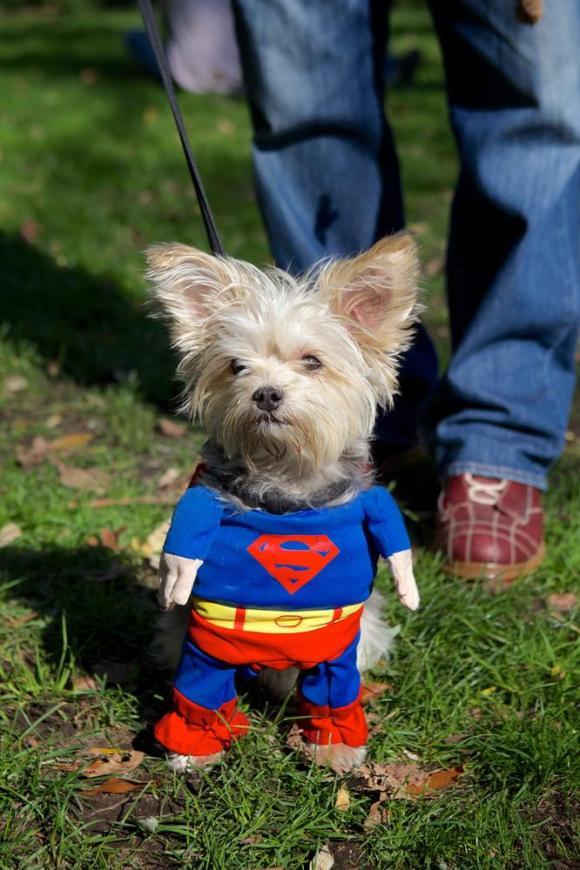 superwoof